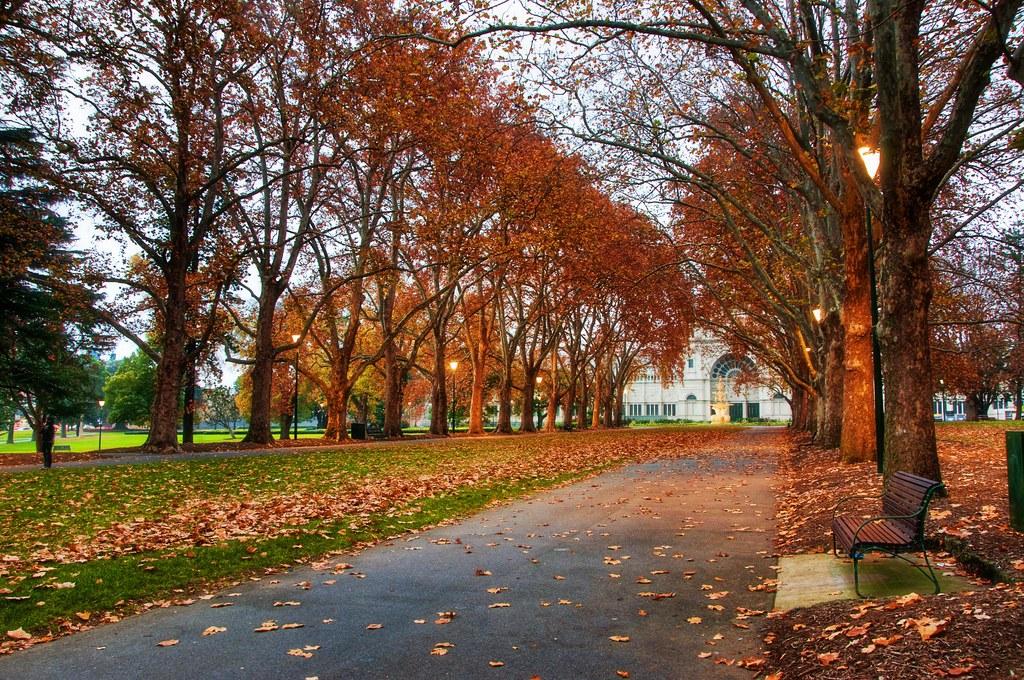 The Autunm Walkway to Winter