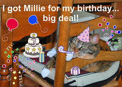 Happy Birthday to Gracie! 0038pb (edgarandron - Busy!) Tags: birthday cats cute cat gracie feline tabby kitty kitties torbie patchedtabby