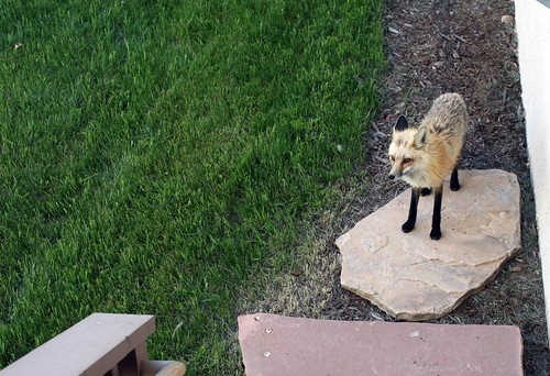 And a fox!