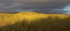 Storm Brewing (Zoe K Williams) Tags: storm grass yellow wales clouds grey sand dunes ceredigion ynyslas