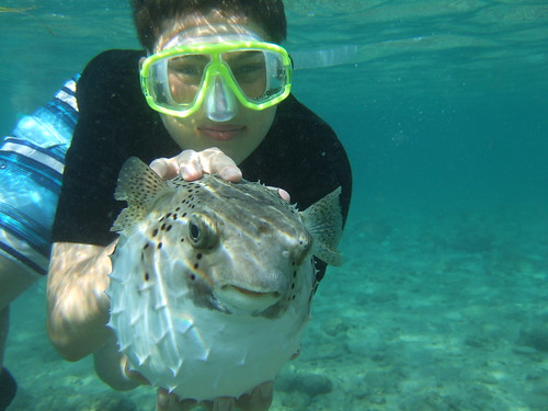 Jake catches a Big porcupinefish!