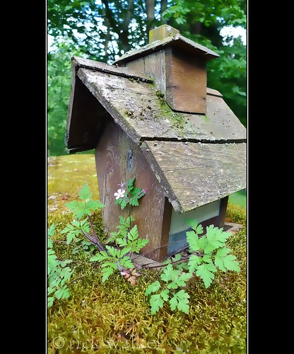 "[old-broken-bird-feeder-atop-moss-covered-garage-roof-with-""herb-robert""-and-bokeh"