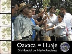 Oaxaca = Huaje