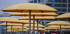 Yellow Umbrellas I (Sally E J Hunter) Tags: toronto yellow umbrella harbourfront moo1 hto 55200mmf456 htopark topwqq