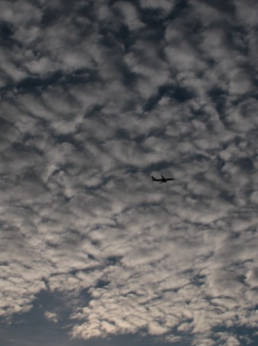 Plane in the morning sky