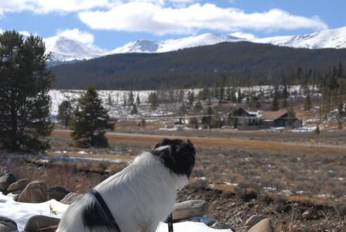 Maverick admiring the view in Breckenridge