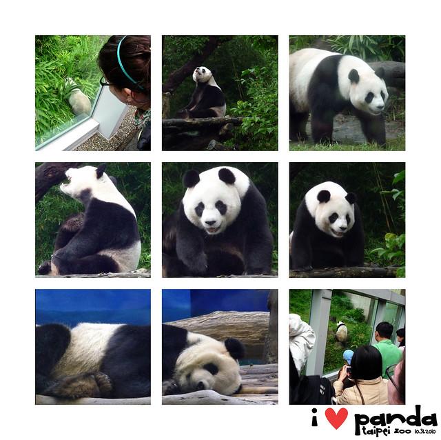 I <3 Panda