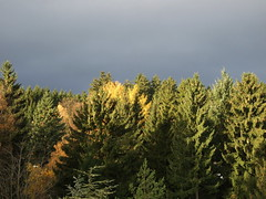 Sunlight on trees before the storm (cee live) Tags: autumn trees sunlight fall forest germany colours stormy taunus stormysky