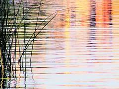 Rainbow colors reflection (thomasgorman1) Tags: water marina reflection sundown canon sunset plants waterplants grassblades rainbow colors