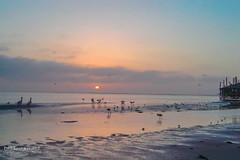 Walvis Bay (Dreamcatcher photos) Tags: walvisbay namibia flamingo pier ocean water beach waterfront