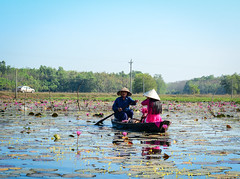 People rowing boat on the lotus lake (phuong.sg@gmail.com) Tags: aquatic asia asian blooming blossom boat circle colors cool country countryside delta dishes environment female floral flower green harvest harvesting horizontal lake leaf lily mekong nature outdoor person petal picks pink plant pond river row rowing rural sit summer vegetables vietnam vietnamese water waterlily wet woman wooden