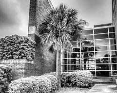 Office Palm Tree (that_damn_duck) Tags: blackandwhite monochrome officepark palmtree reflection building outdoor bw blackwhite