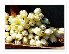 A bunch (aviana2) Tags: travel flowers holland tulips bunch volendam fantasticflower konicaminoltaz3 aviana2 fotocompetition fotocompetitionbronze
