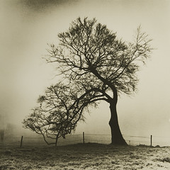 Tree & Fog, Hill of Slane, Co Meath, Ireland (Lith Print) (Martins Photo Scrap Book) Tags: mist fog hill lith 131 foma meath slane fotospeed ld20