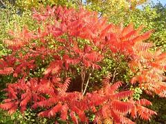 Colour of autumn (ThomasKohler) Tags: autumn fall laub herbst bunt mecklenburg seenplatte mueritz warenmritz mritzsee mueritzsee landkreismritz warenmueritz