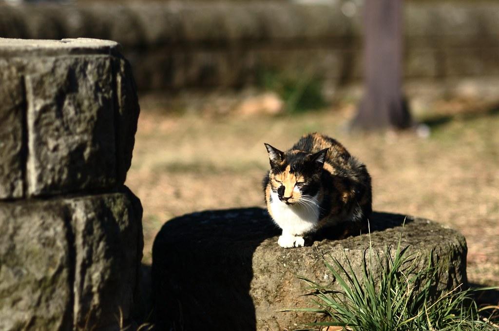 冬の猫達 #2