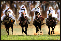 Libyan Cavalry ! (Bashar Shglila) Tags: horses heritage interesting with action shots sony traditional taken explore knight libya tripoli cavalry sidi actions libyan the hooves libia galloping  libyen    lbia libi libiya  liviya libija saih  dschx1    lbija  lby libja lbya liiba livi   assayah