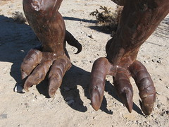 Mary's feet or claws or .....   12-31-09 md (Bob_ Perry) Tags: bigbird ancient paleontology prehistoric avery metalsculpture sandiegocounty goodman outdoorart borregosprings metalart galleta skyart birdfeet sandiegoart prehistoriccreatures morago breceda galletameadows dennisavery galletameadow