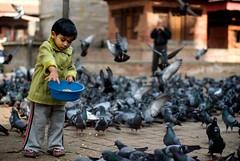 (- reuben -) Tags: nepal boy food birds temple 50mm feeding pentax pigeons kathmandu k10d