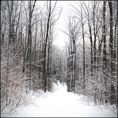 [N6] ( CHRISTIAN ) Tags: trees winter white snow nature forest square countryside path hiver arbres qubec neige campagne blanc sentier chemin fort laurentides carr stcalixte lanaudire