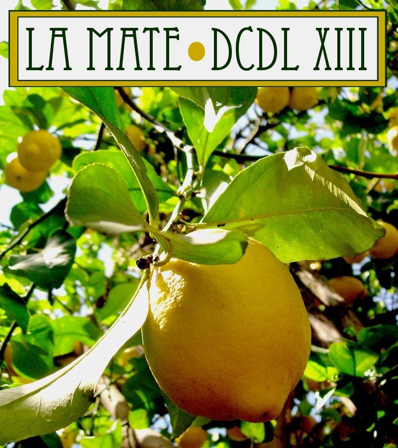 DCDL XIII | La Mate - © Andréa Fradin