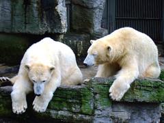 Vienna zoo (FeeMail) Tags: vienna wien zoo austria sterreich tierpark tiergarten karli icebear eisbr schnbrun habsburgs habsburger imperialzoo
