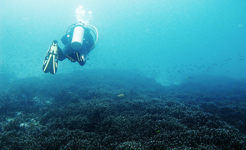 Underwater Gulf of Thailand - Twin Peaks 05