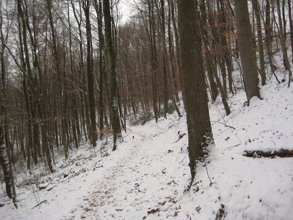 Snowy Sunday Ride