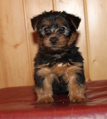 Dwight 7 weeks 2