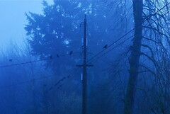 (taylor-randal) Tags: morning blue trees tree fog crows