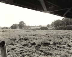 Eisenbahnbrcke ber die Ruhr #2 (Willi Morali) Tags: bridge landscape kodak 8x10 tmax400 brcke ruhr natureslight autaut tanolspeed kontaktkopie moerschphotochemie mt1selenium mt3varioschwefeltoner se2warm adoxmcc110