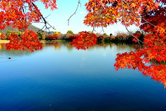 Red pond side (( _`) Sho) Tags: pool japan maple pond kyoto     kansai