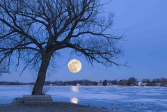 Wolf Moon over the Lake (Michelle Dion ~) Tags: moon lake tree night michigan absolutemichigan