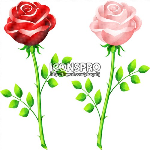 realistic red and pink rose on a