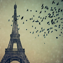 paris imaginary (Gabriela Da Costa) Tags: paris france texture birds torre toren torreeiffel pajaritos deseando photographercuracao parisimaginary wwwgabrieladacostacom gabrieladacostaphotography gabrieladacostafotografa photographerbasedincuracaonetherlandsantillesspecializingineventsportraitsandweddings