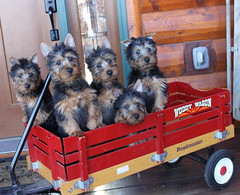 Bea, Scout, Gabby, Cody and Benny 1 (2)