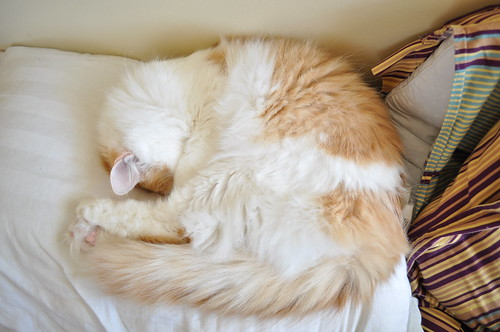 cute cat sleeping napping pic
