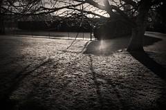 Day light seeps through (rlwhitephotog) Tags: shadow sunlight tree sepia daylight vignetting scenics treebranch lightbeam