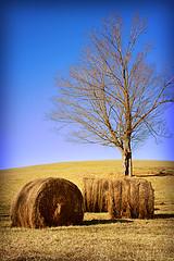bales (Dailyville) Tags: ohio tree bales hillside dailyville ohiofoothills nearbyerohio