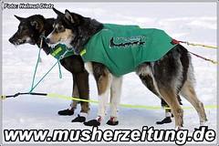 Finnmarkslopet-Hunde