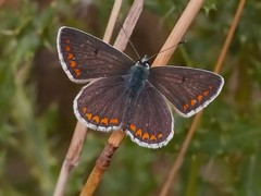Brandon Marsh Slideshow (Andrew Haynes Wildlife Images) Tags: nature birds wildlife warwickshire brandonmarsh ajh2008