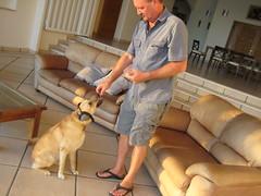 dog training (ABC Dolphin Trainer Academy) Tags: dog trainer trainingsession dogtrainer animaltraining positivereinforcementtraining entrenamientorefuerzopositiva entrenadordeperros