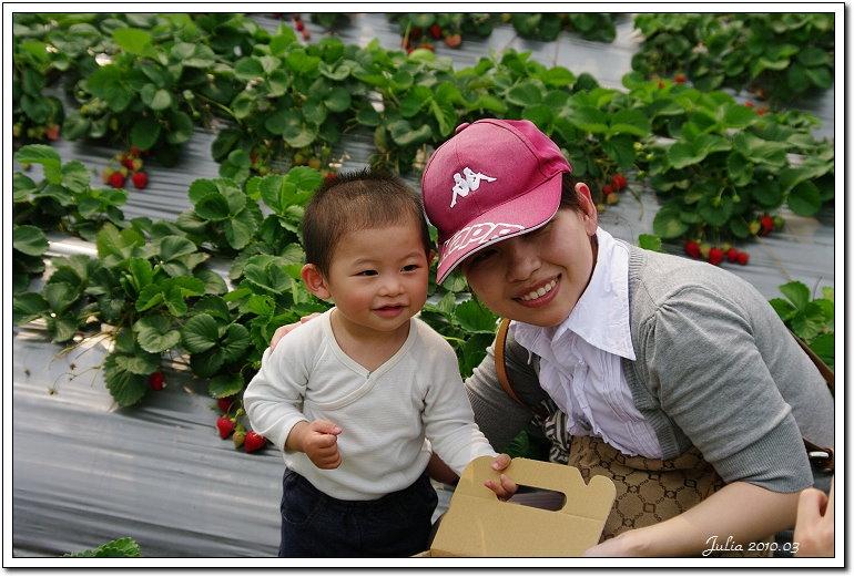 採草莓 (1)