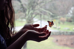 (sandy honig) Tags: lighting window butterfly hair freedom hands bokeh sandy fingers 365 honig