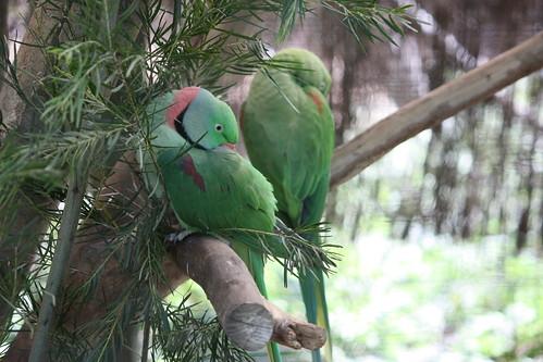 Billabong Wildlife Reserve