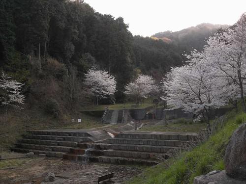 【桜】当麻寺の周辺の公園の桜たち@葛城市