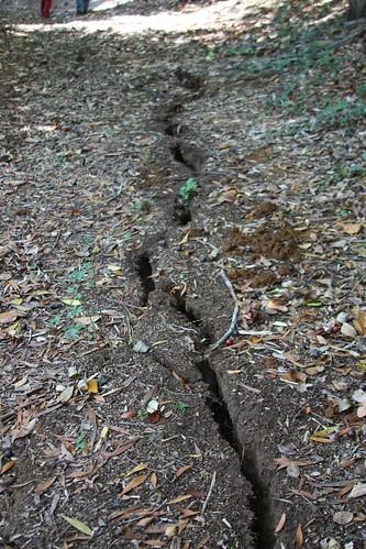 Terremoto en Parque Nativo Reussland