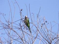 dhi av (dmathew1) Tags: nature birds florida largo ospreynest walsinghampark floridabotanicalgarden livingearth