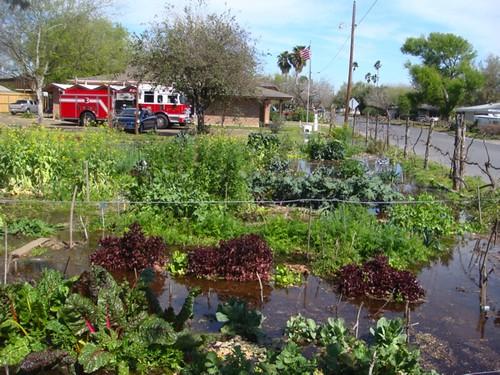 McAllen Community Garden