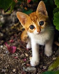 Cat Paros (Terje Kolbeinsen Photography) Tags: thepinnaclehof kanchenjungachallengewinner thepinnacleblog tphofweek61
